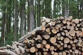 A biomassza biodiverzitás fontossága